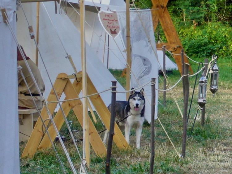 Sonntag-07-21-Husky_Falheim_hintere_Lagerwiese.jpg